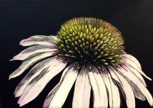 """Coneflower"", 5"" x 7"", scratch board"